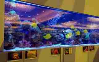 Acrylic for fish tank, OK?